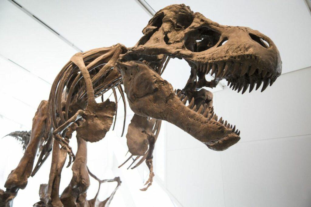 t-rex-dinosaur-royal-ontario-museum-rom